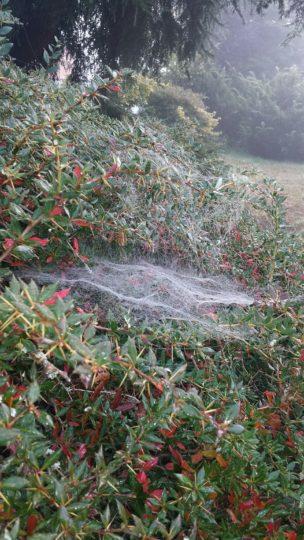 Spinnennetztekunst