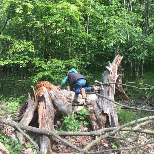 Wald als Spielplatz