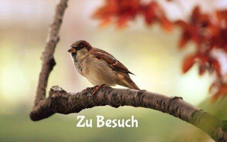 Ein Vogel sitzt auf einem Ast. Dahinter sieht man verschwommene Herbstblätter
