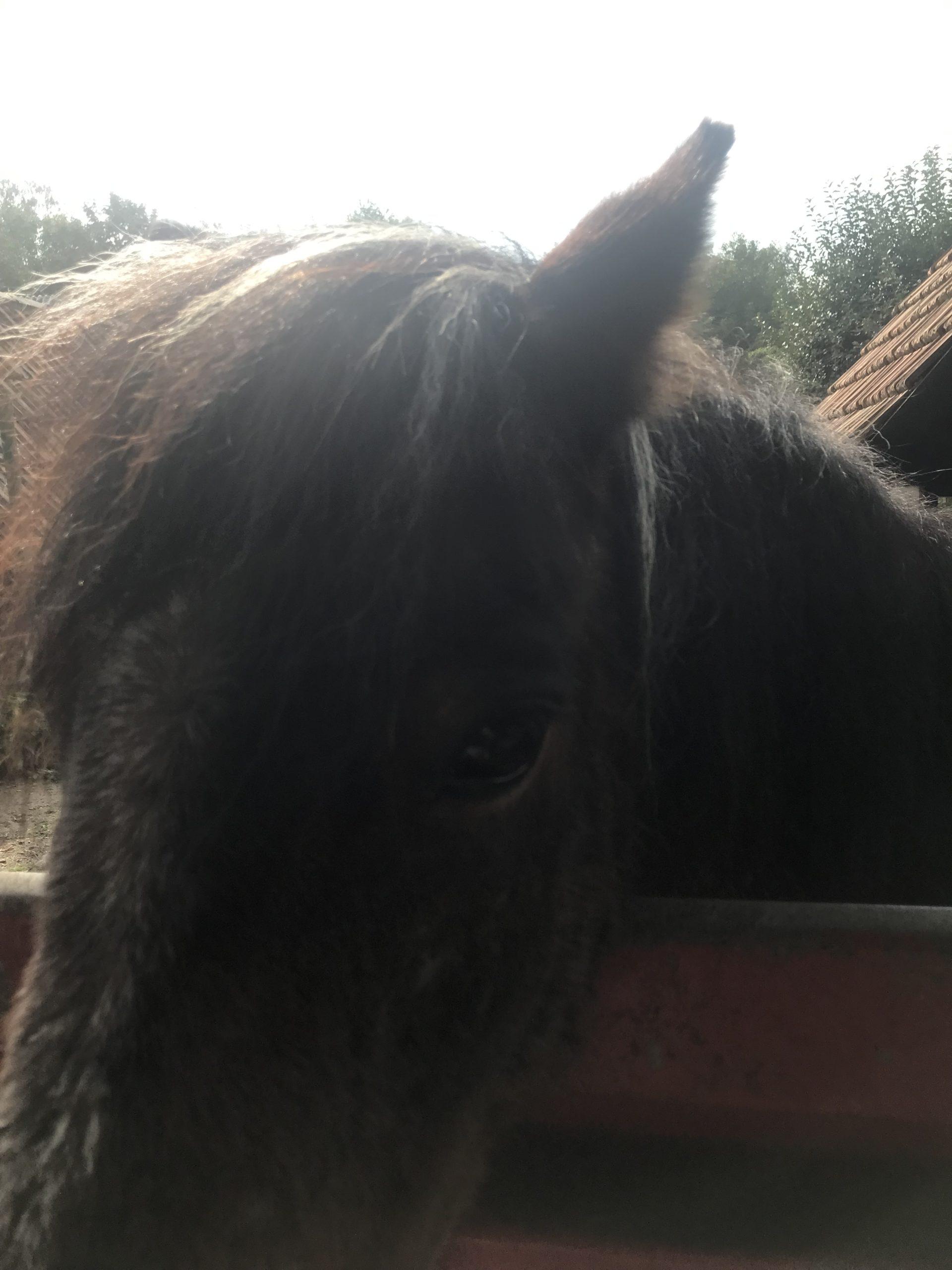 Ein Pferdekopf