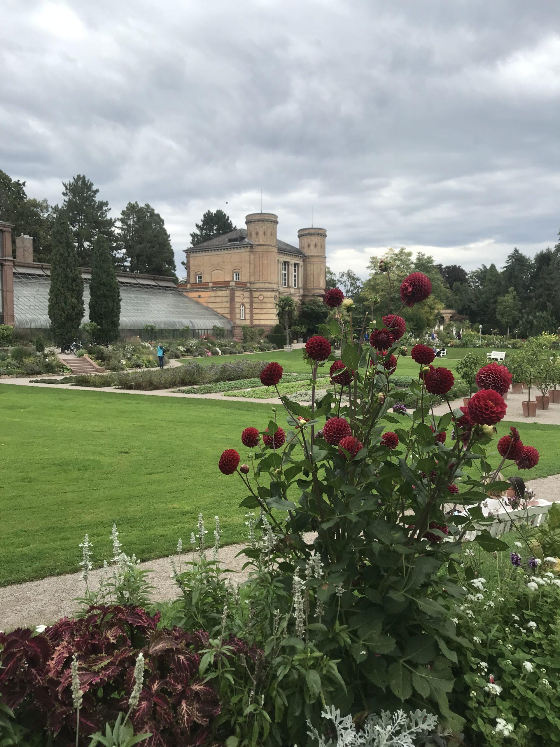 Rote Rosen im Vordergrund, danach Wiese und am Ende Teile des Schlosses